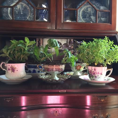 make a Mother's Day teacup herb garden