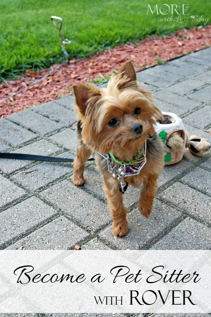 Become a dog sitter with rover more with less today for Babysitter dog sitter