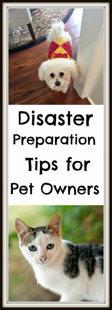 disaster preparation tips for pet owners
