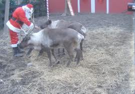 santas-reindeer-video-cam