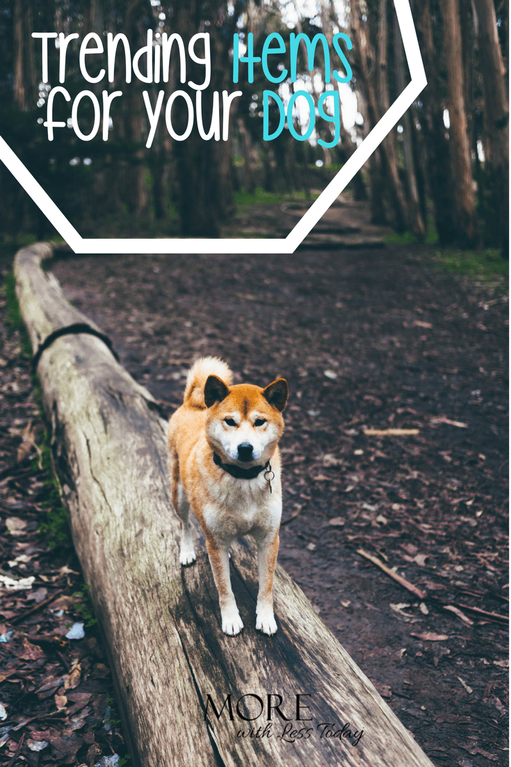 Do you love to spoil your pooch with the latest dog products? Me too! We found 30 trending products your dog wants you to buy.