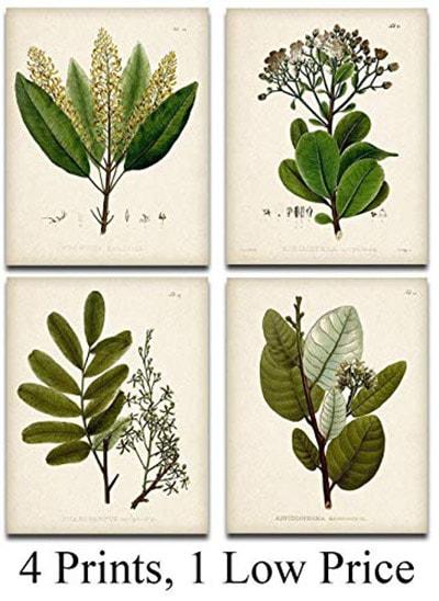 Green Botanical Illustrations - Set of Four Prints (8x10) Unframed