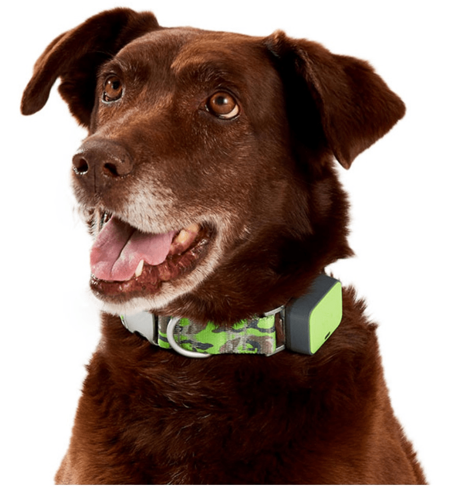 Ellen's Favorite Things for Summer from Walmart dog tracking collar