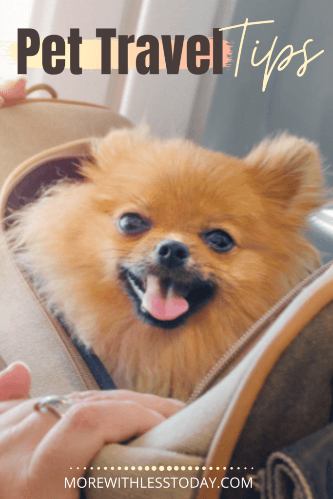 Pet Travel Tips blogpost