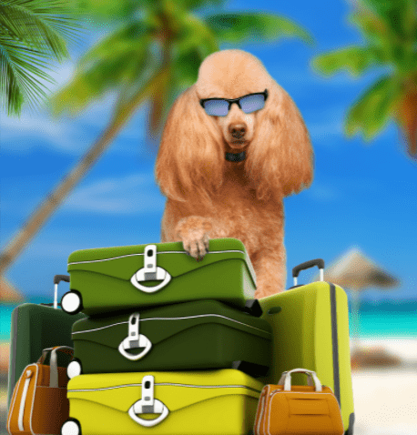 dog with sunglasses and suitcases