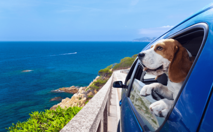 dog hanging out of a car window on a joyride