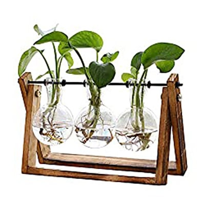 Plant Terrarium with Wooden Stand - 3 Bulb Vase